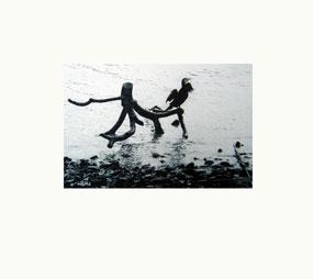 river-cormorant-colour-version-1