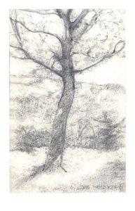 the-tree-at-casetta-del-brinco