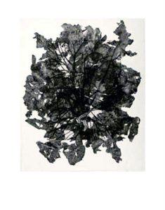 tissue-tree-2