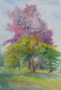 Maples at Kew, watercolour 67x50cm
